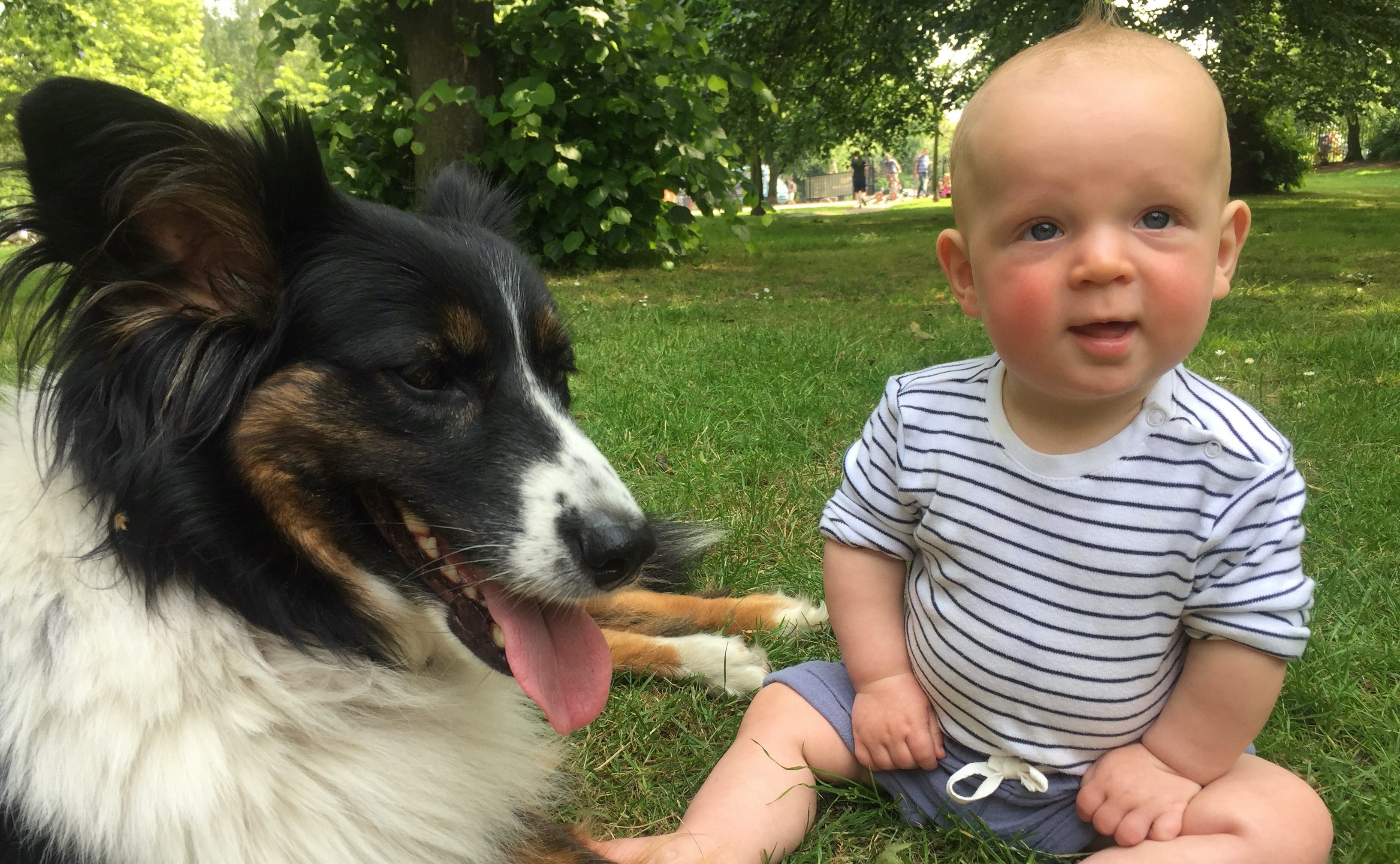 Dogs and babies can become firm friends when introduced properly