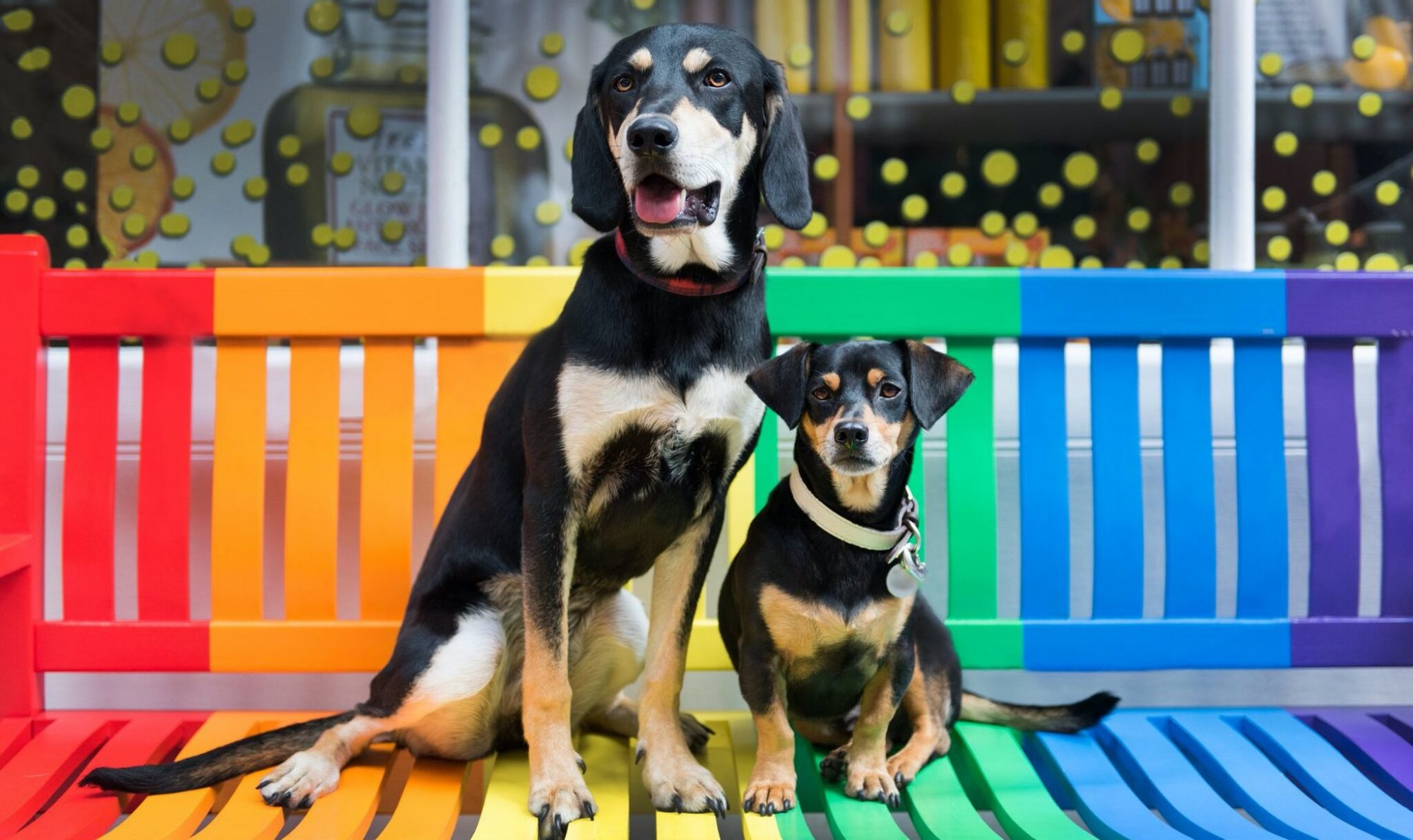 Adopt a dog from abroad and promote overseas dog rescue