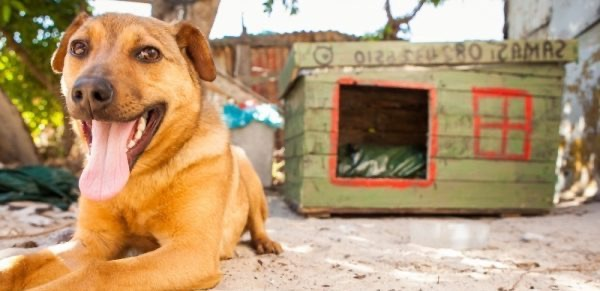 Sterilising the street dogs of South Africa