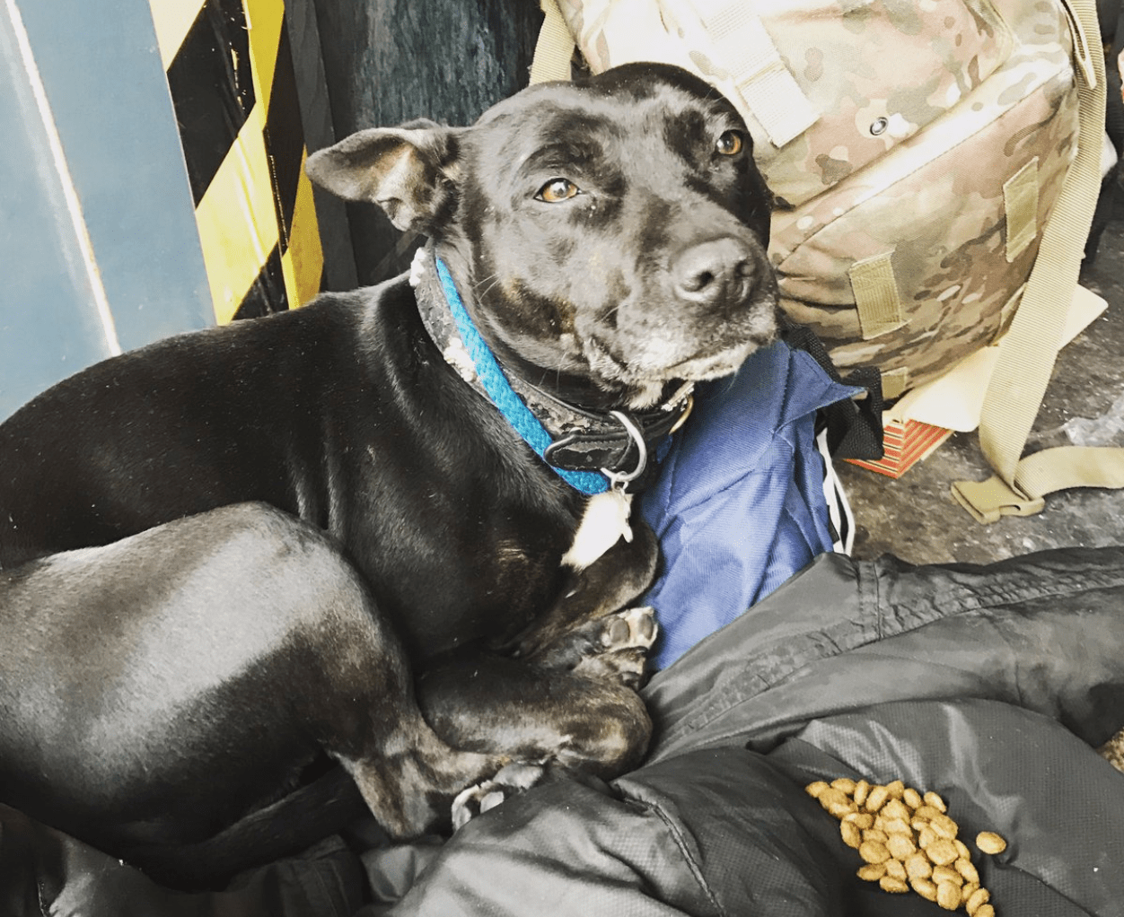 Rescue dogs in London - DOTS