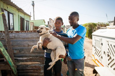 Compassionately reducing the number of stray dogs in this South African township