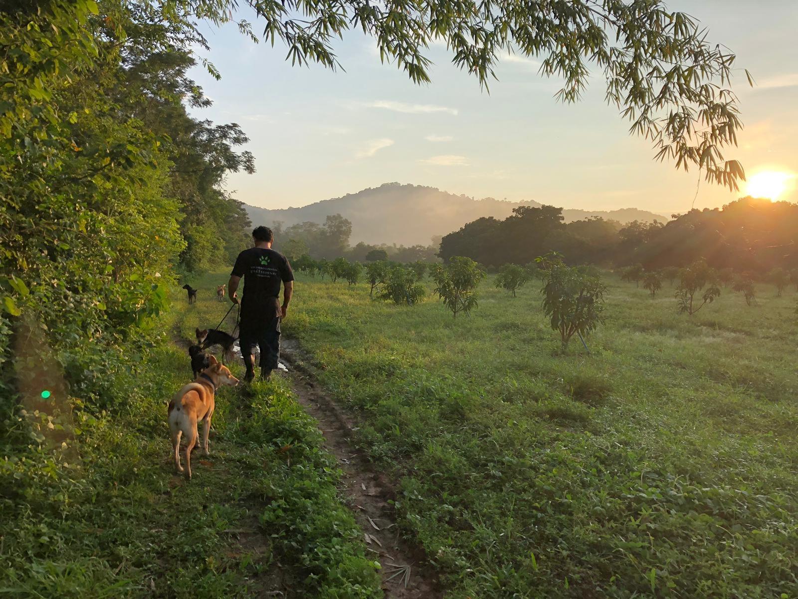 Bon Jardin x Wild at Heart - dog rescue Thailand
