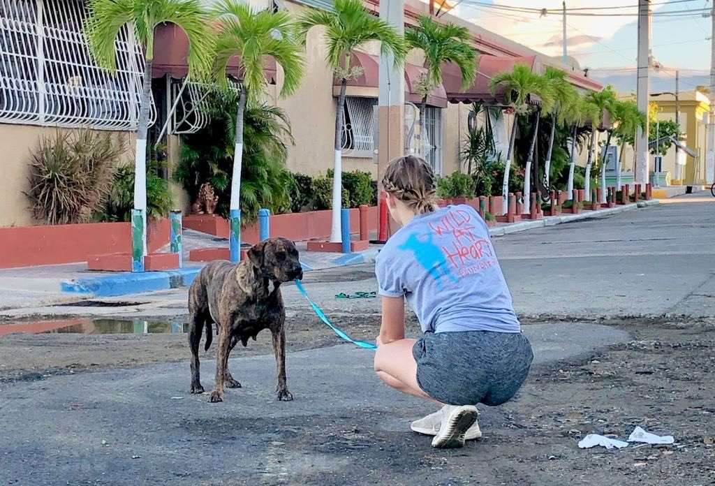 Compassionate methods of controlling stray dog populations