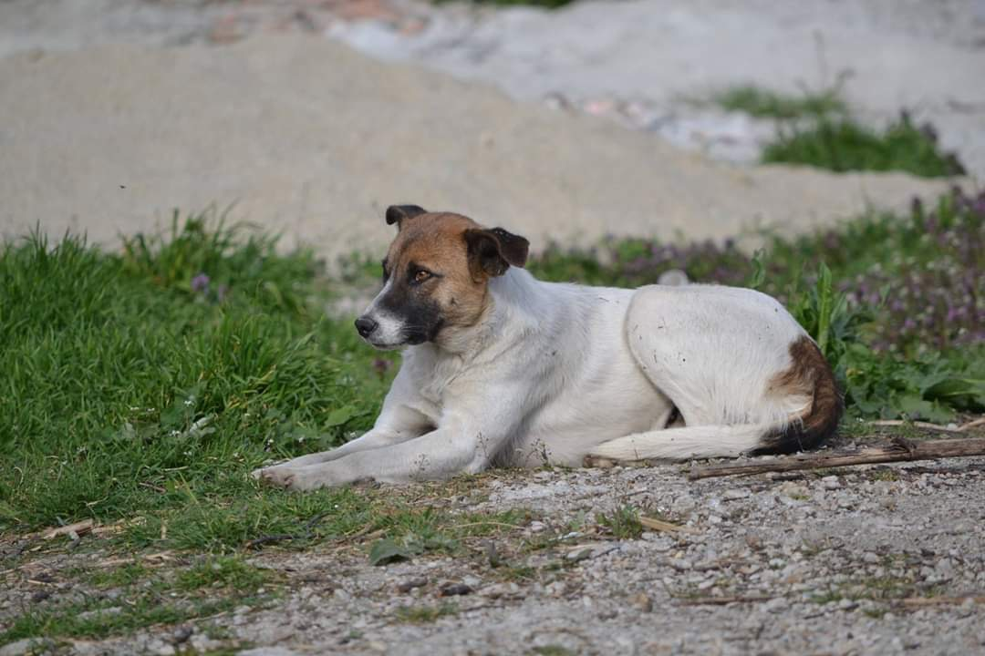 Sponsor a rescue dog from Romania
