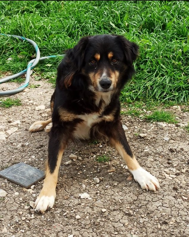 Rescue a dog from Greece