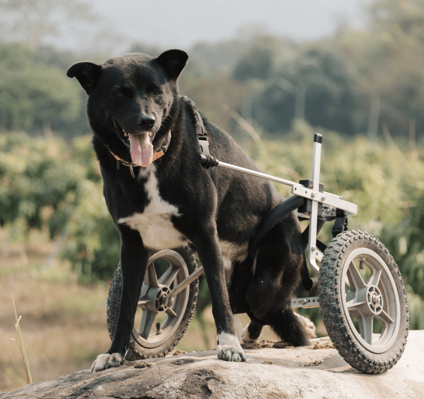 Sponsor a rescue dog from abroad