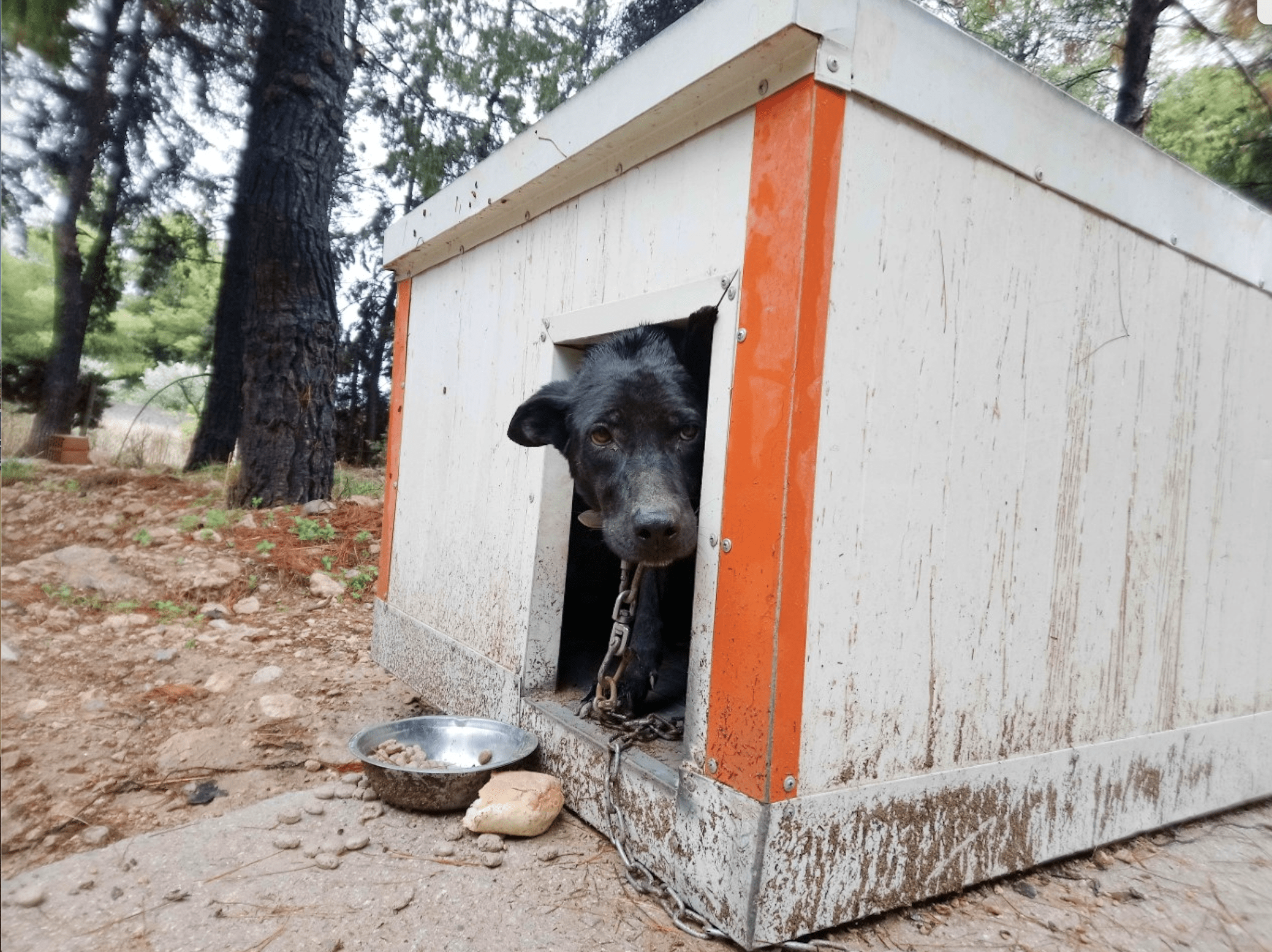 Support our dog rescue work in Greece