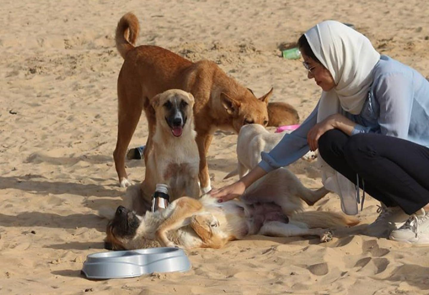 gaza stray dog