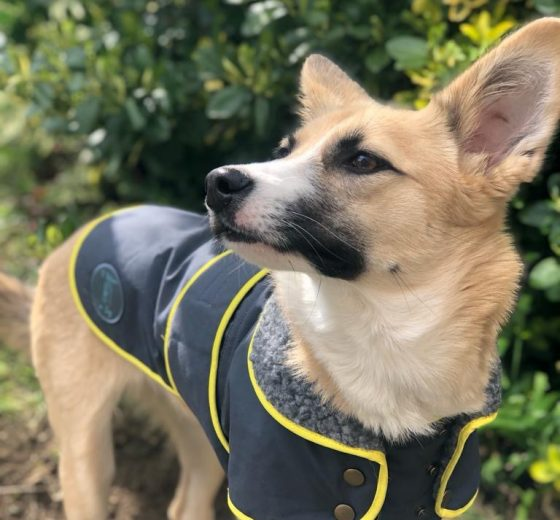 Dog jackets – 30% off!