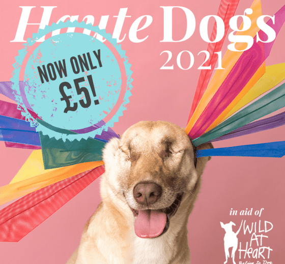 Last chance: Haute Dogs 2021 Calendar