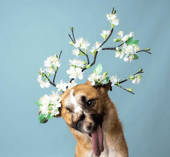 Haute Dogs 2021 Calendar – now £5!