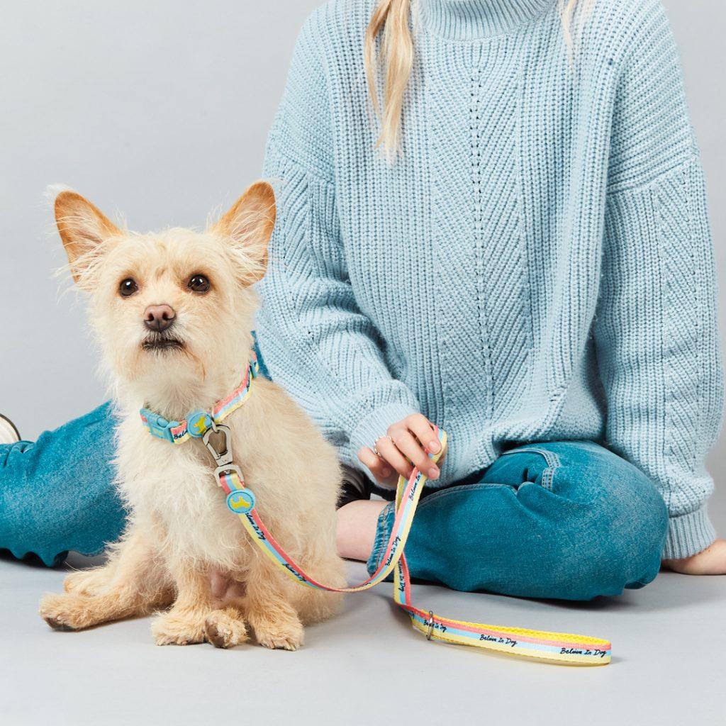 dog in lead collar