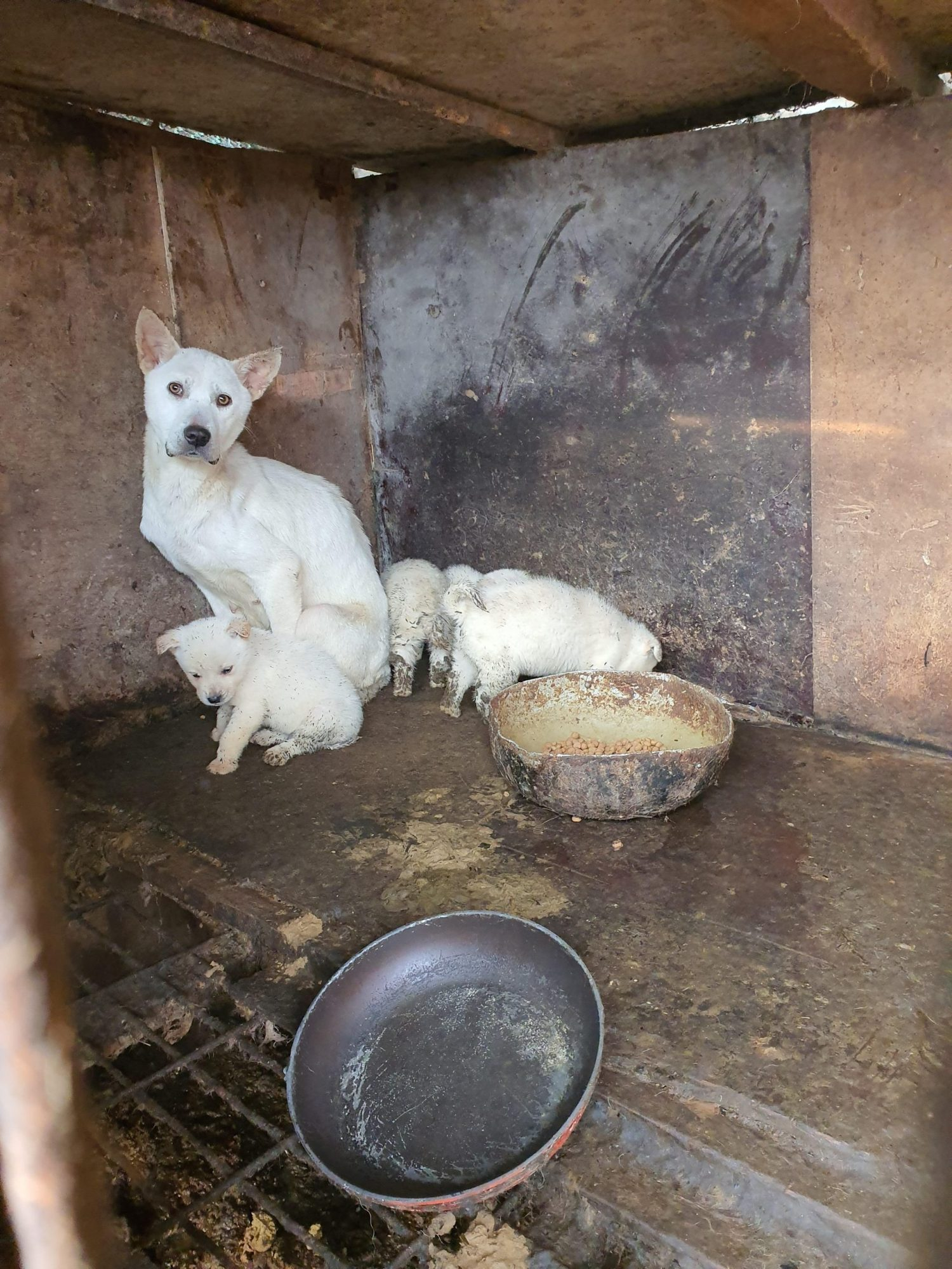 South Korea dog meat trade